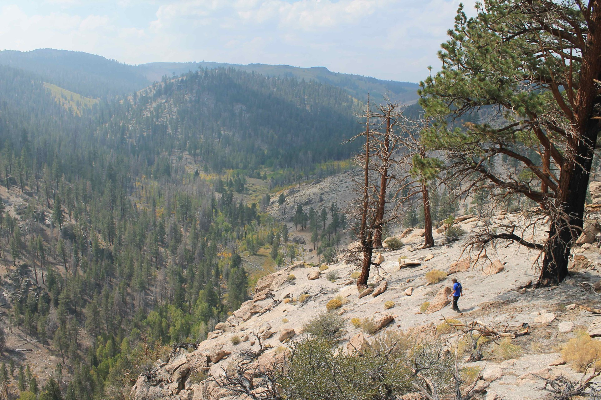 Dexter_Canyon_Inyo_Forest