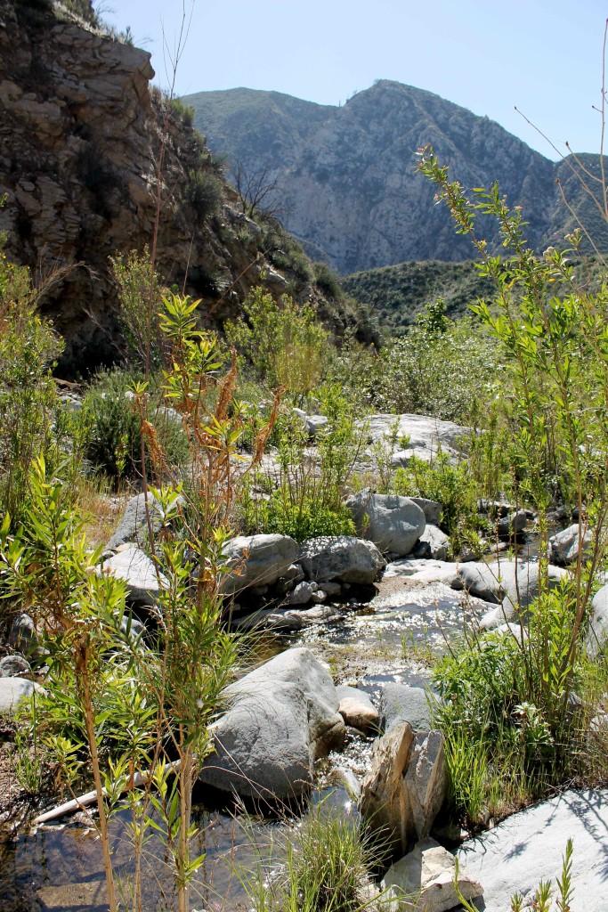 Trail Canyon Creek