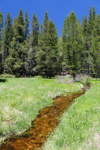 Trout Creek photo by Steve Evans