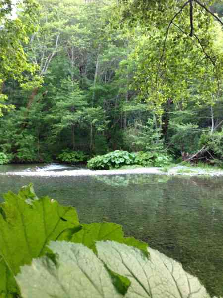Upper South Fork Trinity River
