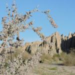 Desert lavender by Ruth Nolan