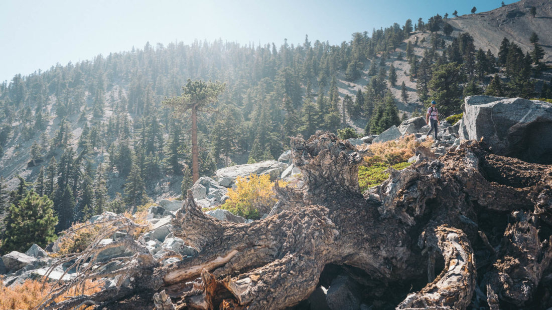 Mt. Baldy by Jack Schlinkert