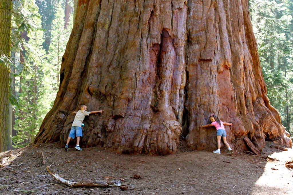 Giant Sequoia NM. Photo by Liliana Usvat