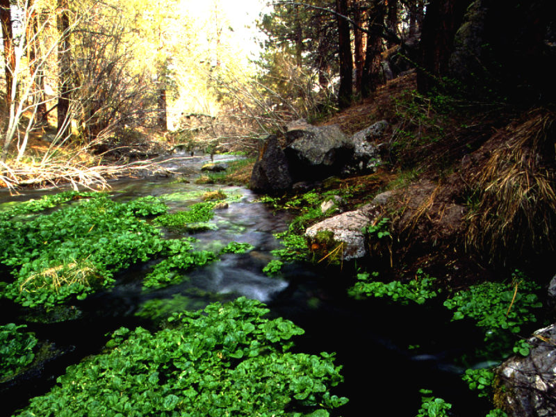 Fact Sheet: Owens Headwaters Wild & Scenic River