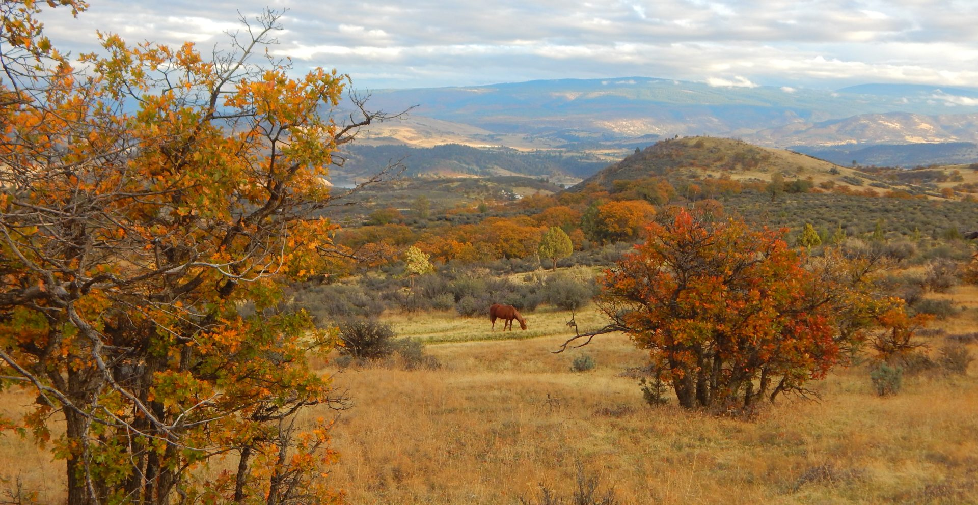 feral horses in SE or Horseshoe Ranch (16) cropped