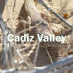 Cadiz Valley