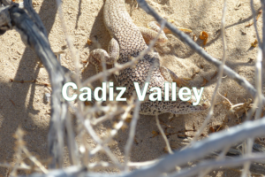 Cadiz Valley