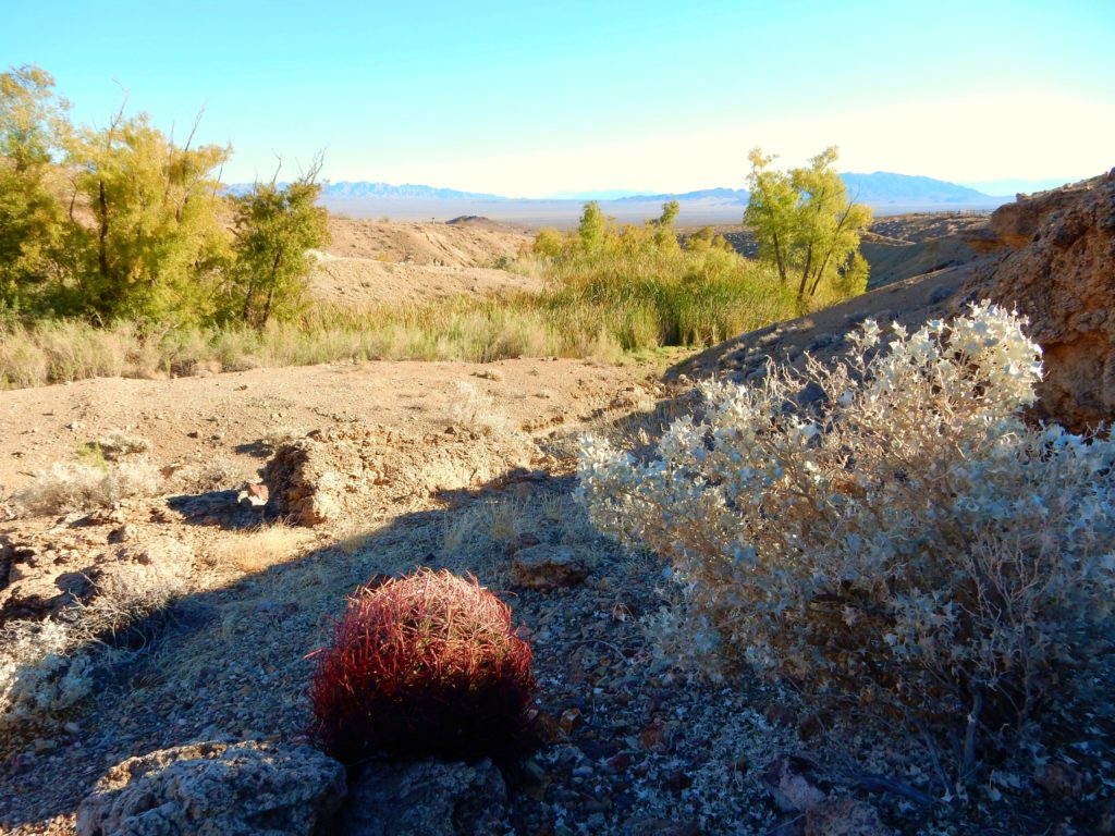 A Community Proposal For A Management Plan: Mojave Trails ...
