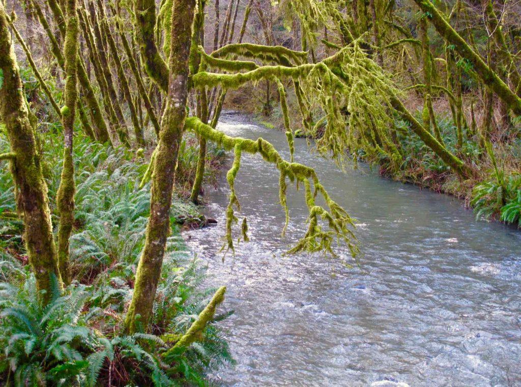 Lost Man Creek.